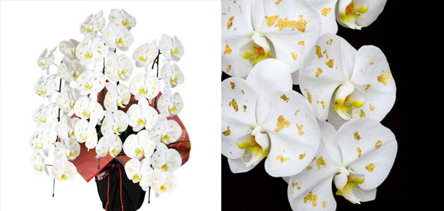 金箔の胡蝶蘭